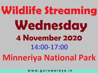 Live from Minneria National Park (2 - 5 pm)